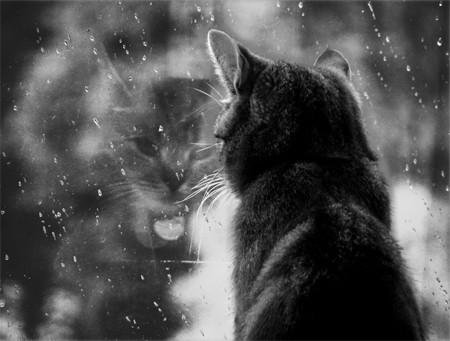 leau-de-pluie-ca-se-recupere