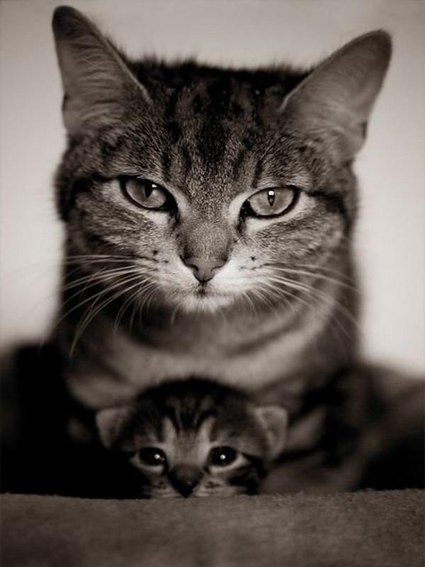 CHATTE et son chaton.. BONNE FÊTE DES MèRES..